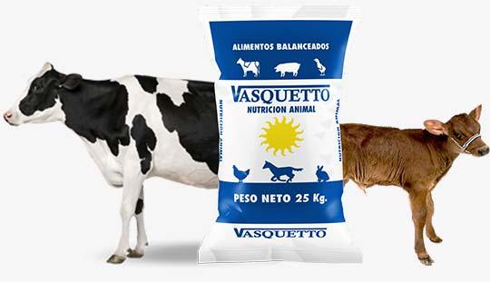bovinos - Vasquetto Nutrición Animal - Río Cuarto
