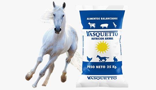 Equinos - Vasquetto Nutrición Animal - Río Cuarto