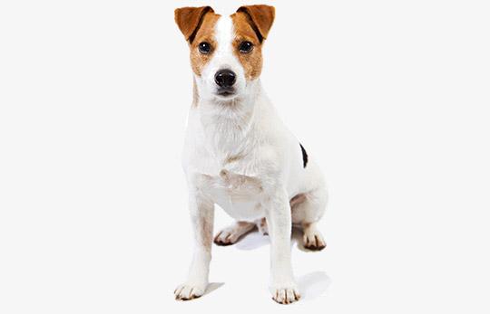 Perros - Vasquetto Nutrición Animal